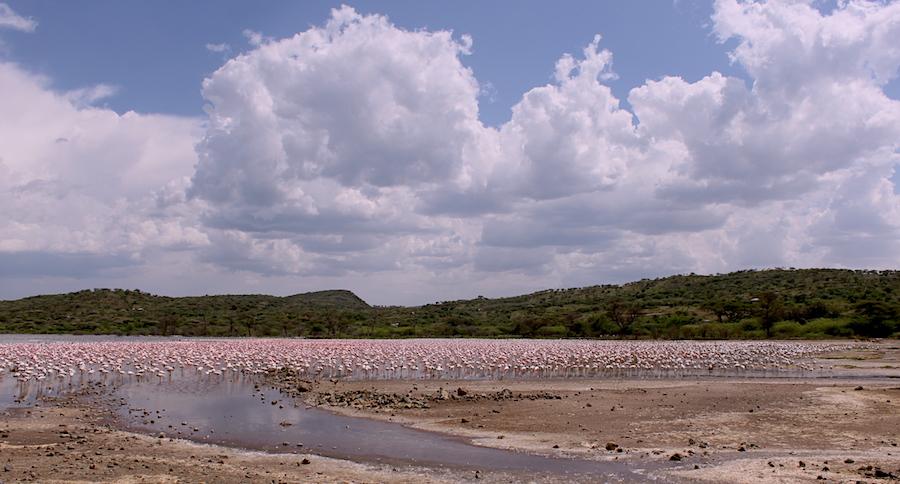 More than 90 flamingoes